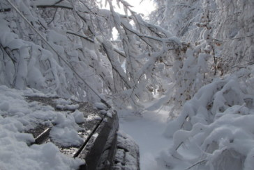Инцидент край Рилския манастир! Кола изхвърча в крайпътно дере, спасяват 4-членно семейство