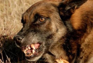 Кучета нападнаха жена, разкъсаха ѝ краката