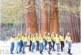 """Претендентките за """"Девойка Кюстендилска пролет 2018"""" с първа фотосесия пред вековните секвои на Ючбунар"""