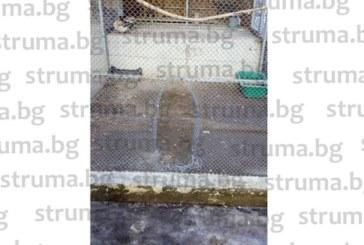 Срязаха мрежите и откраднаха гълъби и заек от зоокъта в парка на Перник