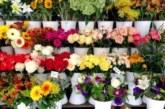 Сложете това цвете в дома си и с вашия организъм ще се случи чудо невиждано