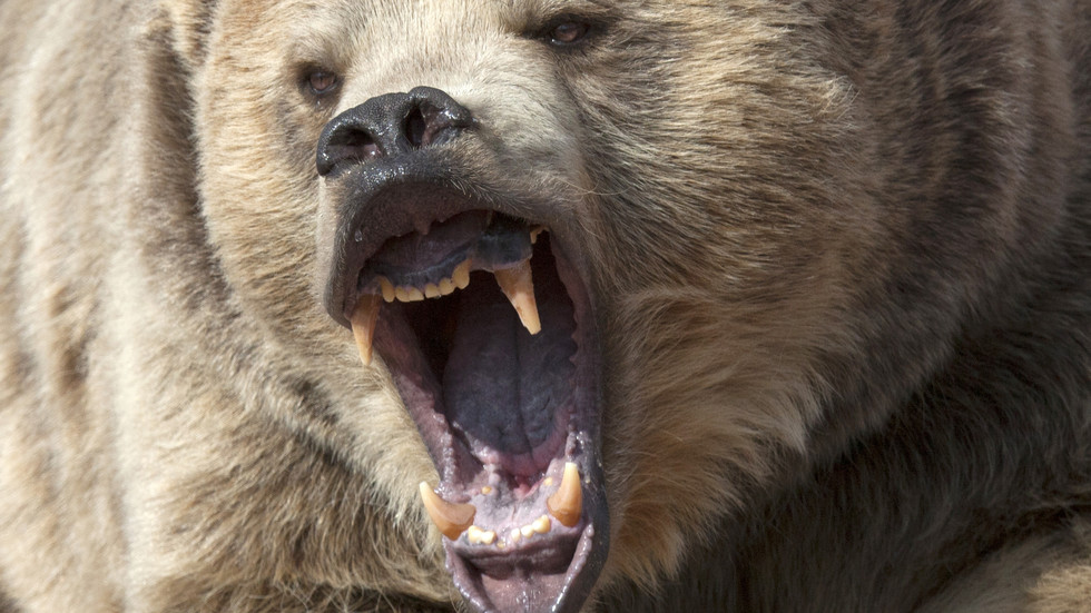 Смелчага се би с мечка, за да спаси кутрето си