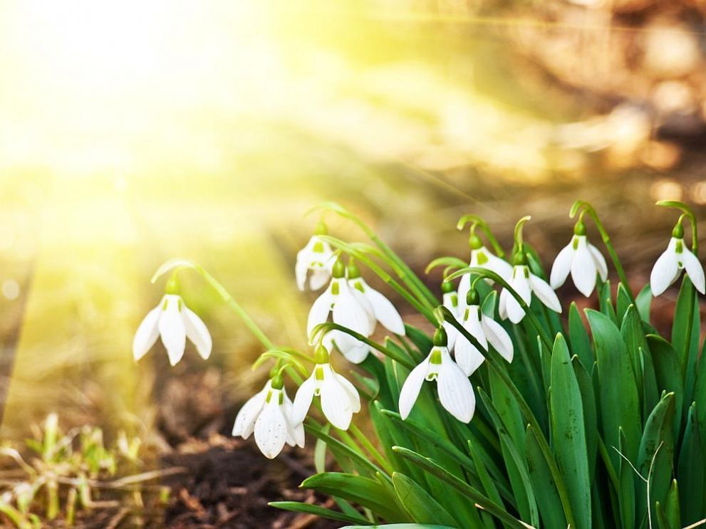 Зима и студ до края на февруари, рязко затопляне в началото на март