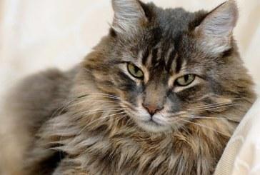 Най-красивите котки на международна изложба в Благоевград
