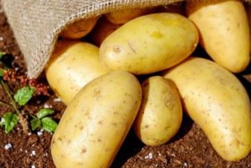 Картофите намаляват риска от инфаркт и деменция