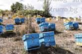 В района с най-нисък добив на мед в България за 10 г. приятели от Сандански направиха пчелин с 480 кошера