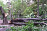 Ураганен вятър удари Кюстендил