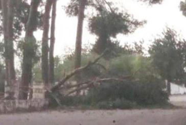 Хаос на о. Крит заради ураганен вятър