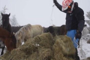 Още 5 коне загинаха в Осоговската планина, спасители достигнаха до бедстващите животни