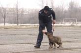 20 нови полицейски кучета ще пазят границите ни