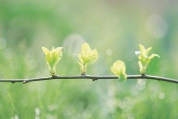 Времето ни изненадва! Истинската пролет се завръща, за Великден живакът рязко пада
