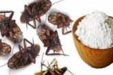 Как да се отървем завинаги от хлебарките