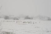 Десетки щъркели в снежен капан, заплашени са от премръзване