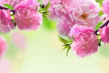 """Днес имен ден имат всички, чиито имена значат """"който краси света"""""""