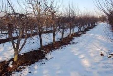Закъснялата зима удари производителите! 30% от овошките в Кюстендилско поразени от студа