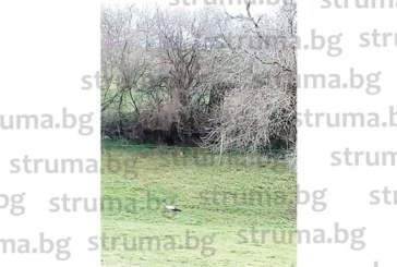 Пролетта подрани, в бобовдолското  Големо село кацна първият щъркел, в  Гоцеделчевско им се радват от 8 март
