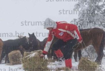 """За 5 г. собственикът на каракачанските коне П. Пищалов санкциониран с 67 000 лв. от Държавен фонд """"Земеделие"""""""
