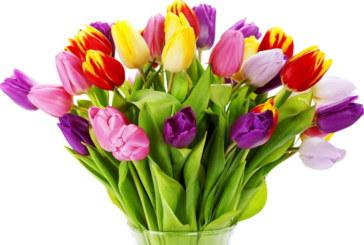 Осми март – Международен ден на жената