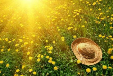 Слънце и летни температури днес