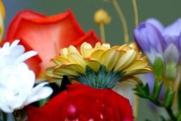 Всяка зодия има цвете-талисман, което трябва да си гледате вкъщи!