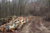 Горски и ченгета с акция в Пиринско! Удариха бракониери на дърва, единият напълнил цял камион