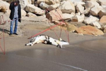 ШОК! Труп изплува на варненския плаж