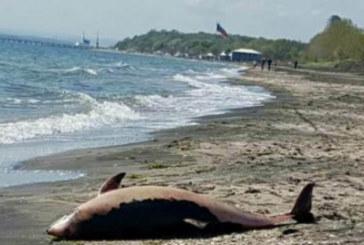 Голяма драма на бургаския плаж