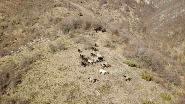 Дрон откри още от конете на П. Пищалов