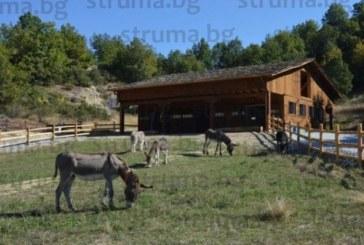 ЛЮБОПИТНО! Собствениците на магарешкия приют в Баничан правят и ветеринарна клиника, РИОСВ ги обърка с ветерани, събрали пари за крайселска вила