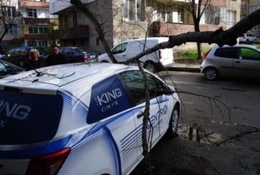 """Ураганен вятър създаде хаос в Благоевград, клон се стовари върху """"Тойота"""""""
