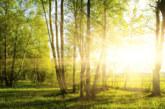 Летни температури и слънце до обяд, после заоблачаване