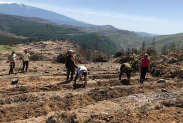 Започна възстановяването на изгорелите гори в Стара Кресна