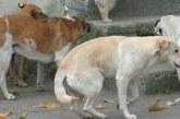 Зловещо! Откриха 14 мъртви кучета в двор в Перник, собственикът задържан