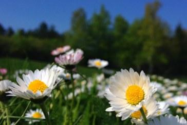 Новата седмица идва със слънце и високи температури