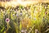 Синоптиците обещават истинско лято през Светлата седмица