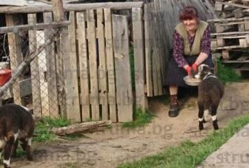 Огромен звяр напада в Санданско! Хората са притеснени, страхуват се да излизат