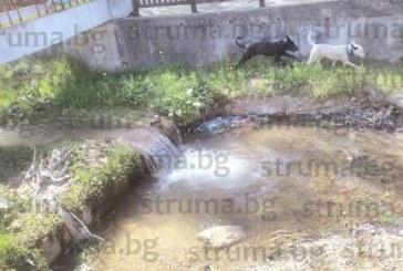 Джерманци пропищяха: Кучетата в селото станаха повече от хората