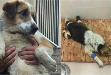 Лекари се борят за живота на кучето с отрязани лапи