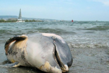 Морето край Бургас изхвърли два трупа