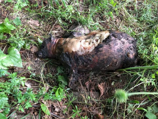 Брутална жестокост! Запалиха и изгориха куче