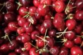 Жандармерия ще пази черешите в Кюстендилско
