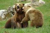 Почина мечокът Гошо от Парка за танцуващи мечки