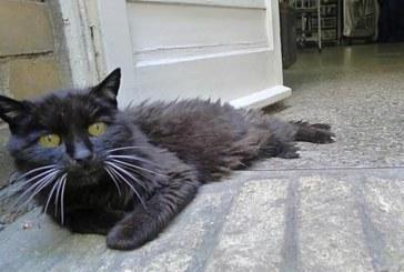 Котка се завърна при стопанина си, 18 години след като избяга от къщи