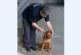 Ето го кучето-герой Ричи, което хвана хероин за 12 млн. лева
