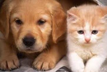 Разследват смъртта на 3 кучета и 1 котка