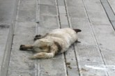 Полиция и ветеринарни лекари на крак заради отровени кучета в Югозапада