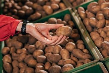 Не яжте такива картофи, в тях има отрови /СНИМКИ/