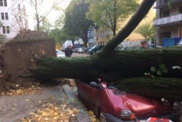 Дърво се срина върху кола, има затиснати хора