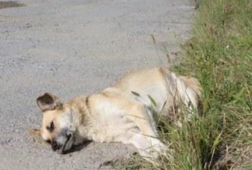 Разследват смърт на кучета в Санданско