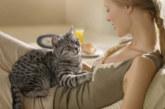 Котките могат да лекуват
